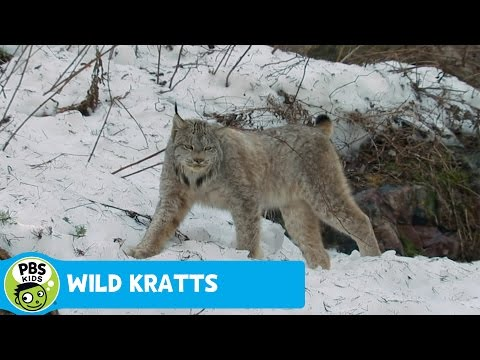 Wild Kratts - PBS Kids