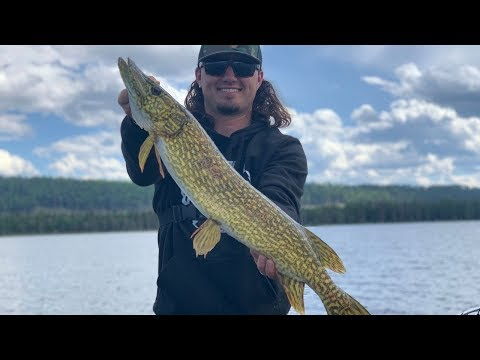 GOLDEN Pike Fishing in Canada! {Catch Clean Cook}