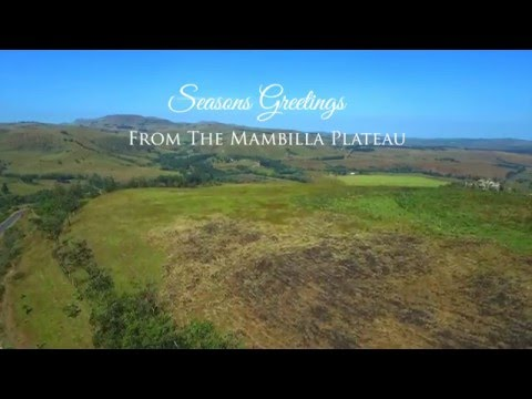Seasons Greetings from the Mambilla Plateau