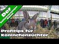 Profitips Zur Kaninchenhaltung Und Rassekaninchenzucht Gacor(.mp3 .mp4) Mp3 - Mp4 Download