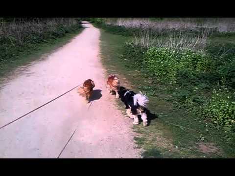 Walkies at Coombe Abbey Travel Video