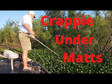 Catching Crappie Under The Thickest Grass Matts In Louisiana's Atchafalaya Basin