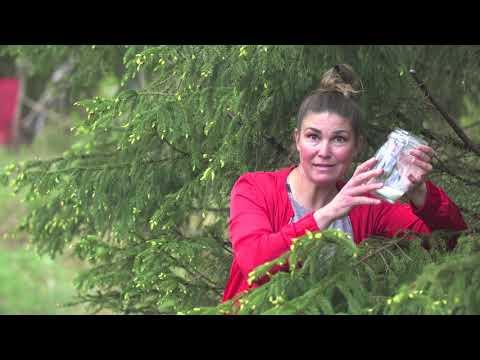Skogsträdgården -samlar viltplockat i Hemma hos Jessica v 20 . Självhushållning
