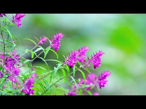 A friend like grass flowers by Han Seok San