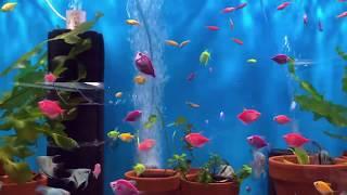 Рыборазводня в гараже, часть 3: новая поставка рыбы, наполнители для фильтров и креветочник
