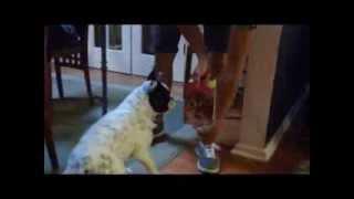 French Bulldog Lily & Birthday Card