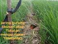 Jaring Burung Tikusan Di Persawahan Menggunakan Tambang  Mp3 - Mp4 Download