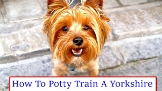 +Housetraining Your Yorkie -FREE Mini-Course -Yorkie Puppy Housebreaking Tips.........