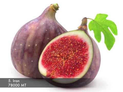Top 10 Fig Producing Countries