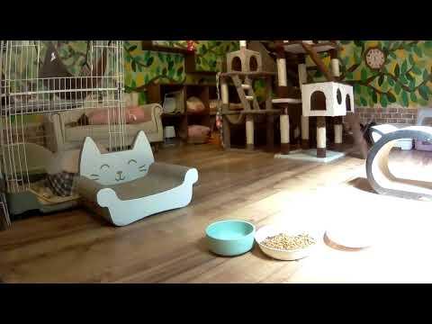 猫Live@笑にゃんこ王国(秩父) ブルーハウス1階[Cat live]