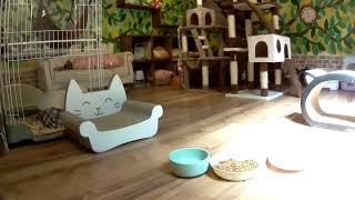 猫ライブ! [Cat live] 埼玉県秩父市「笑(ニコ)にゃんこ王国」からLIV...