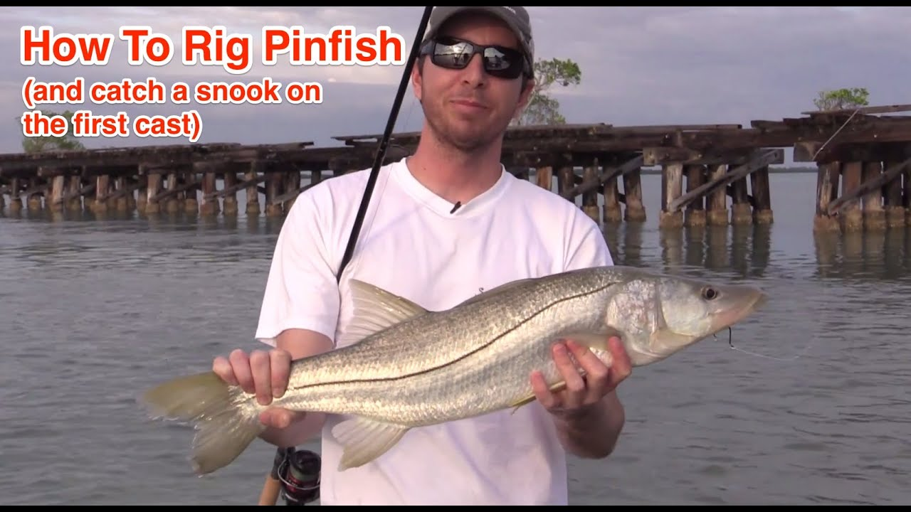 how to catch pin fish