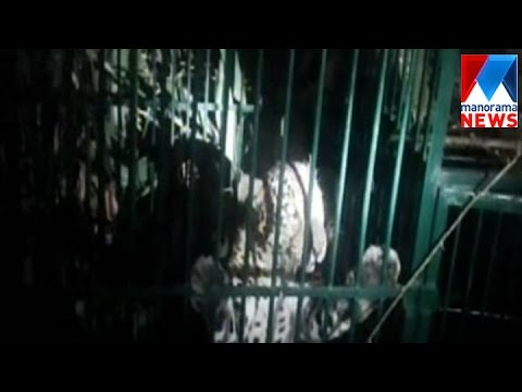 Forest Department Capture Leopard From Pathanamthitta | Manorama News
