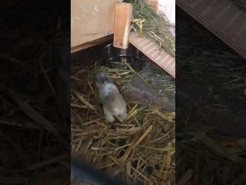Onze baby konijnen 2weken oud