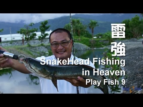 Home animals snakehead fish videos channel youtube mp4 for Fishing youtube channels