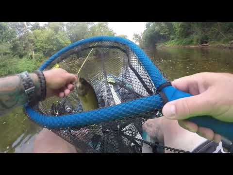 Rivanna River Smallmouth Bass Fishing!