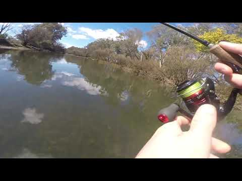 Trout Fishing The Goulburn River