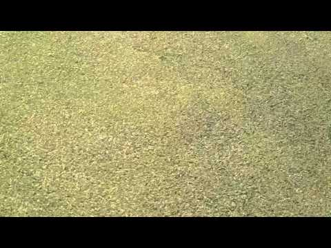 how to cut your grass like a putting green