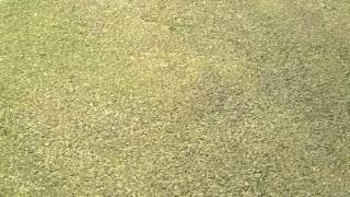Verticut Grooming Your Greens