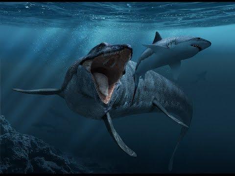 PMN Presents Animal Kingdom: the Mosasaurus