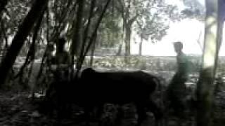 Video animal cow sex 4 download MP3, 3GP, MP4, WEBM, AVI, FLV Juni 2018