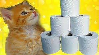 Что будет если дать котятам туалетную бумагу? СМЕШНЫЕ КОТЫ И КОШКИ