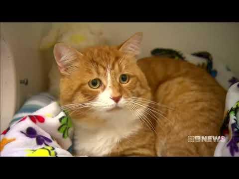Animal Cruelty | 9 News Perth