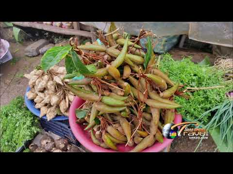 SUAB HMONG TRAVEL:  Highlight COMING UP 2017-18 Travel in Laos and Thailand