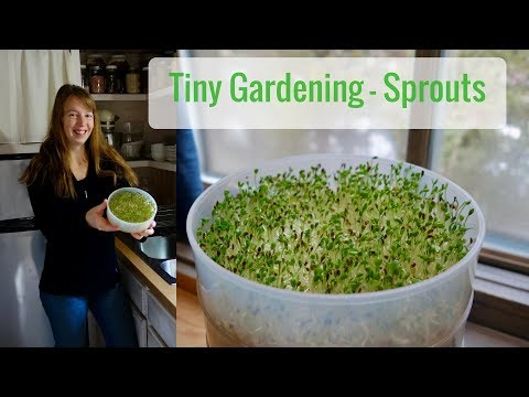 Life in a Tiny House called Fy Nyth - Tiny Gardening, Sprouts