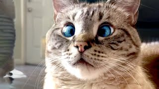 Cross Eyed Cat Is Adorable | Funny Pet Videos