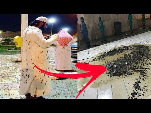 شاهد صراصير تهاجم المصلين في الحرم المكي !! لن تصدق