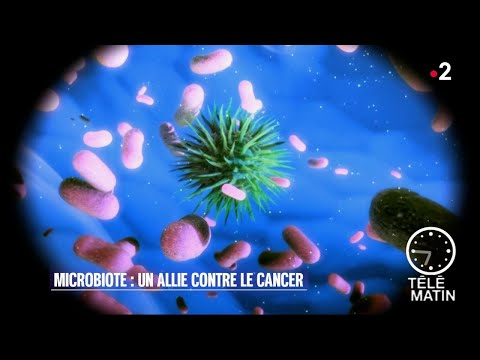 Santé - Notre intestin potentialise les traitements anti-cancer