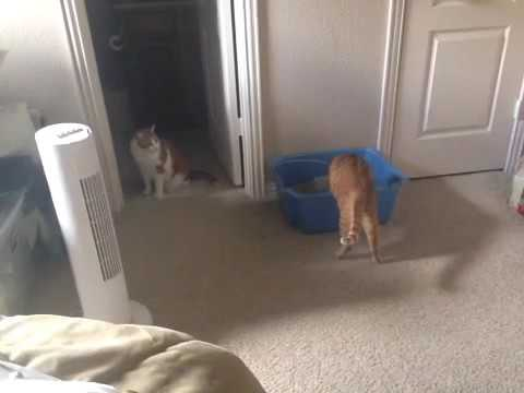 introducing two male cats to each other youtube. Black Bedroom Furniture Sets. Home Design Ideas