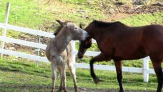 DONKEY AND HORSE PLAYING