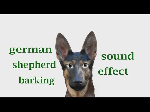 How A German Shepherd Barking - Sound Effect - Animation