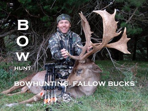 Bowhunt Fallow Bucks New Zealand
