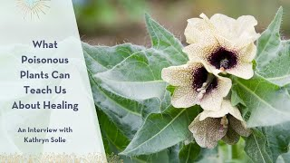 What Poisonous Plants Can Teach Us About Healing - An Interview with Kathryn Solie