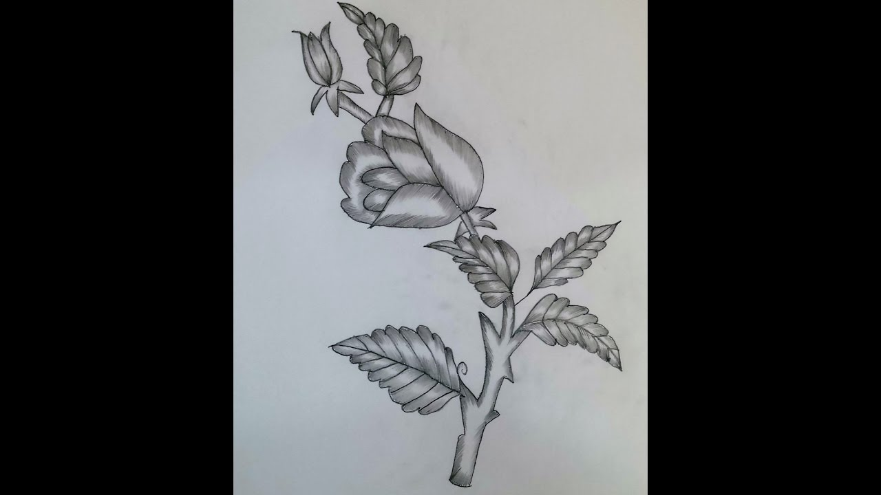 My Creative Art 2 : How To Draw And Shade A Rose With Pencils