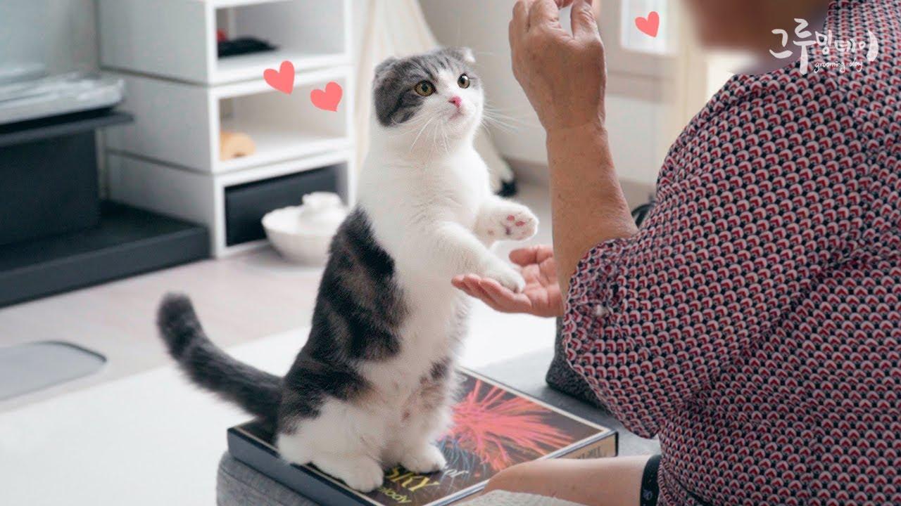 고양이를 무서워하던 어머님이 변하셨어요