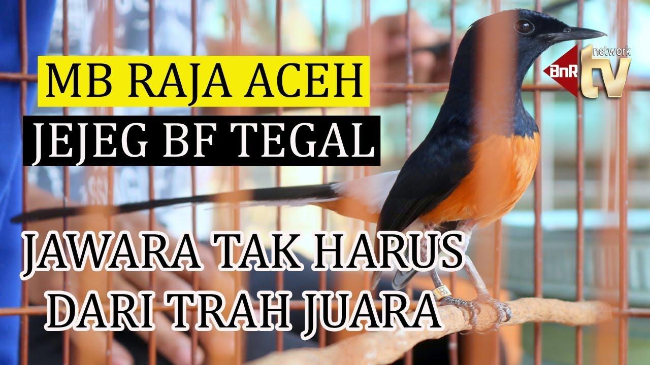 Jawara Tak Harus Dari Trah Juara Murai Raja Aceh Buktikan Kualitas Produk Jejeg Bf Tegal Youtube