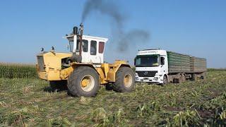 Rába Steiger 250 - Kamion mentések! Truck stuck in mud!