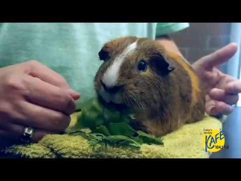 Washington Craigslist Pets