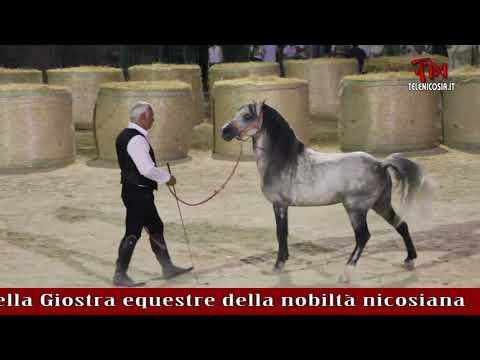 Pierluigi Arrigo Vince La Quinta Edizione Della Giostra Equestre Della Nobiltà Nicosiana