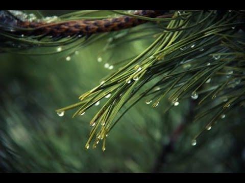 9 ore di Pioggia, Vento e Temporale, Suoni Binaurali per completo relax mentale e fisico,