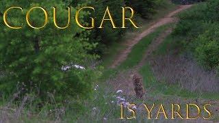 Near Cougar Attack by Washington Idaho Boarder