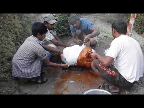 Animal Slaughter | Nepal | Content Graphics | Killing Animal | Food Chain |