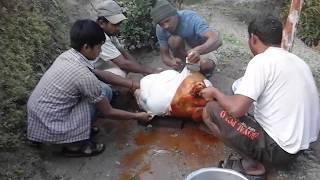 Animal Slaughter | Nepal | Content Graphics | Killing Animal | Food Chain |