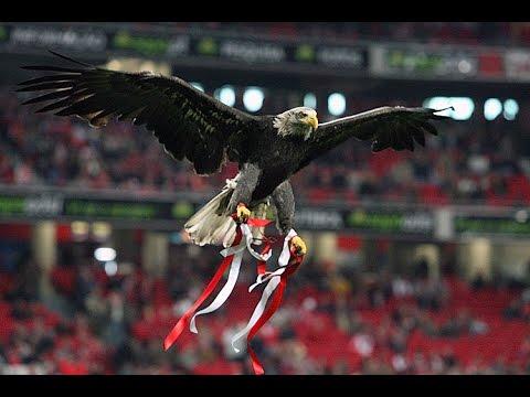O vôo da águia - Benfica vs Sporting 0-3 (Dérbi) Jornada 8 - 25/10/2015 from YouTube · Duration:  1 minutes 37 seconds