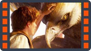 Птица-гром — Фантастические твари и где они обитают (2016) сцена 2/7 HD