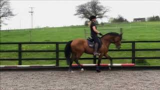 My amazing horse! Cash Legend 22/04/2018